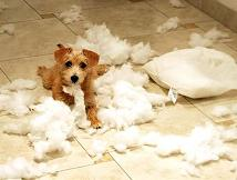 puppymess.jpg