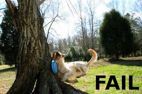 frisbee-fail_small.jpg